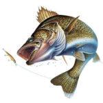 Рыбалка Охота